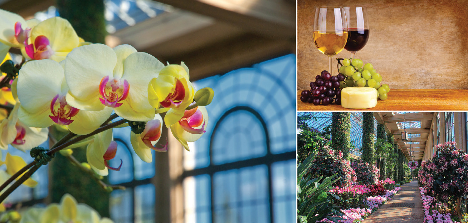 Qvc Orchids Wine Aaa Central Penn