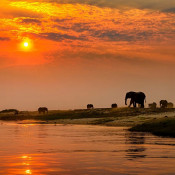 Travel - Photo Contest - Ellies at Sunset 16